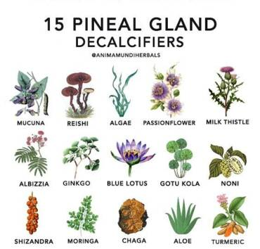 Importance Of Keeping Your Pineal Gland Healthy